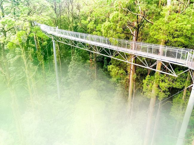Bridge - Man Made Structure Day No People Nature Outdoors Tree River Plant Growth Water Beauty In Nature Grass Naturelovers Travel Australian Landscape Australia Tree Treetopwalk Highness OverTheClouds Fog Foggy