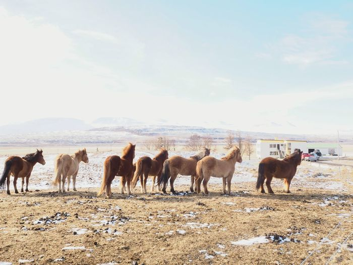 Horses standing in ranch against sky