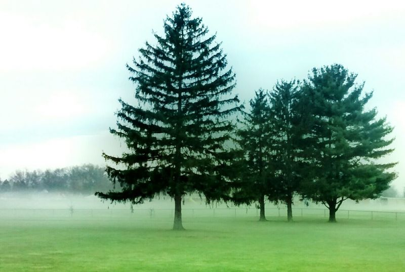 Early morning misty day..3pines Early Morning EyeEm Best Shots - Landscape Hugging A Tree Minimalobsession Foggy Morning EyeEm Best Shots - Minimalist Still Life Photography Tree Silhouette Showcase: December