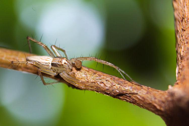 spidey Spider