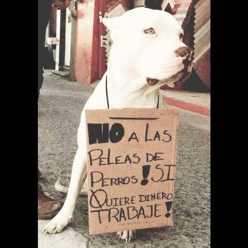 Pro Animalista TodoElRato Cuidemos a Nuestros Animalitos