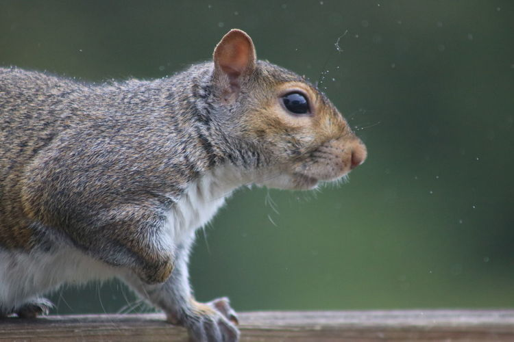 EyeEm Selects Pets Water Close-up Squirrel