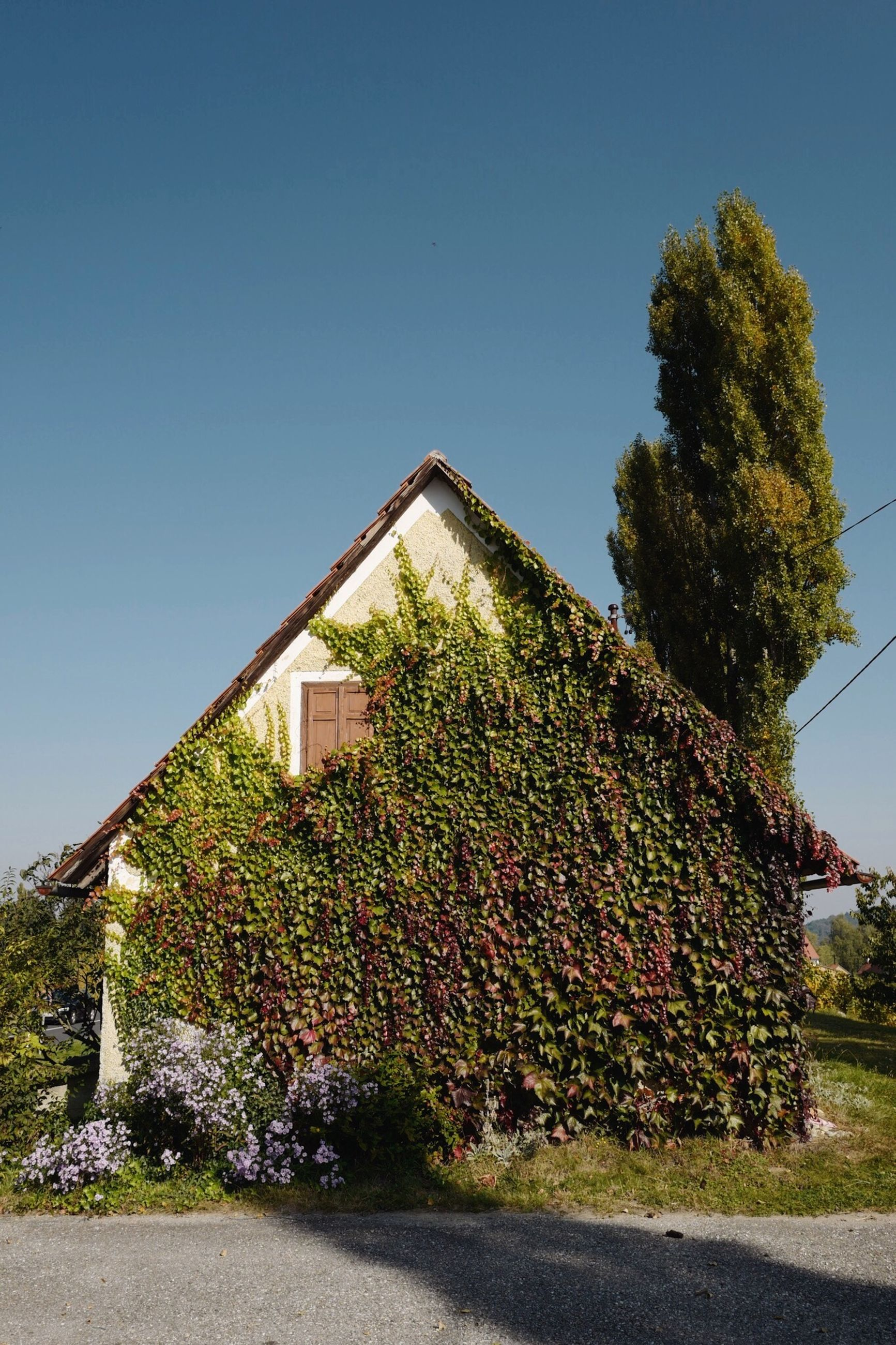 plant, sky, architecture, built structure, nature, tree, no people, clear sky, growth, building, day, blue, building exterior, house, sunlight, copy space, outdoors, green color, road, ivy, hedge