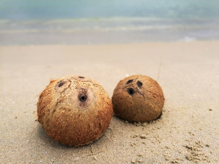 """coconut shell"" Beach Coconut Coconuts Day Nature Outdoors Sand Whistler Whistlers Funny Faces Funny Coconut Shells Happy Family Family❤"