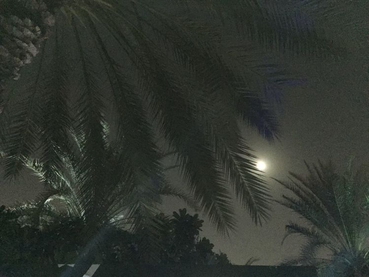 Check This Out Leaves Night Nightphotography Dark Darkness And Light Nature Abstract Moon Moonlight Moonlit Night Moonlight Through The Trees Moonlit Trees