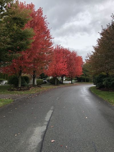 Fall colors on Cape Cod. Tree Plant Road The Way Forward Direction Sky Nature