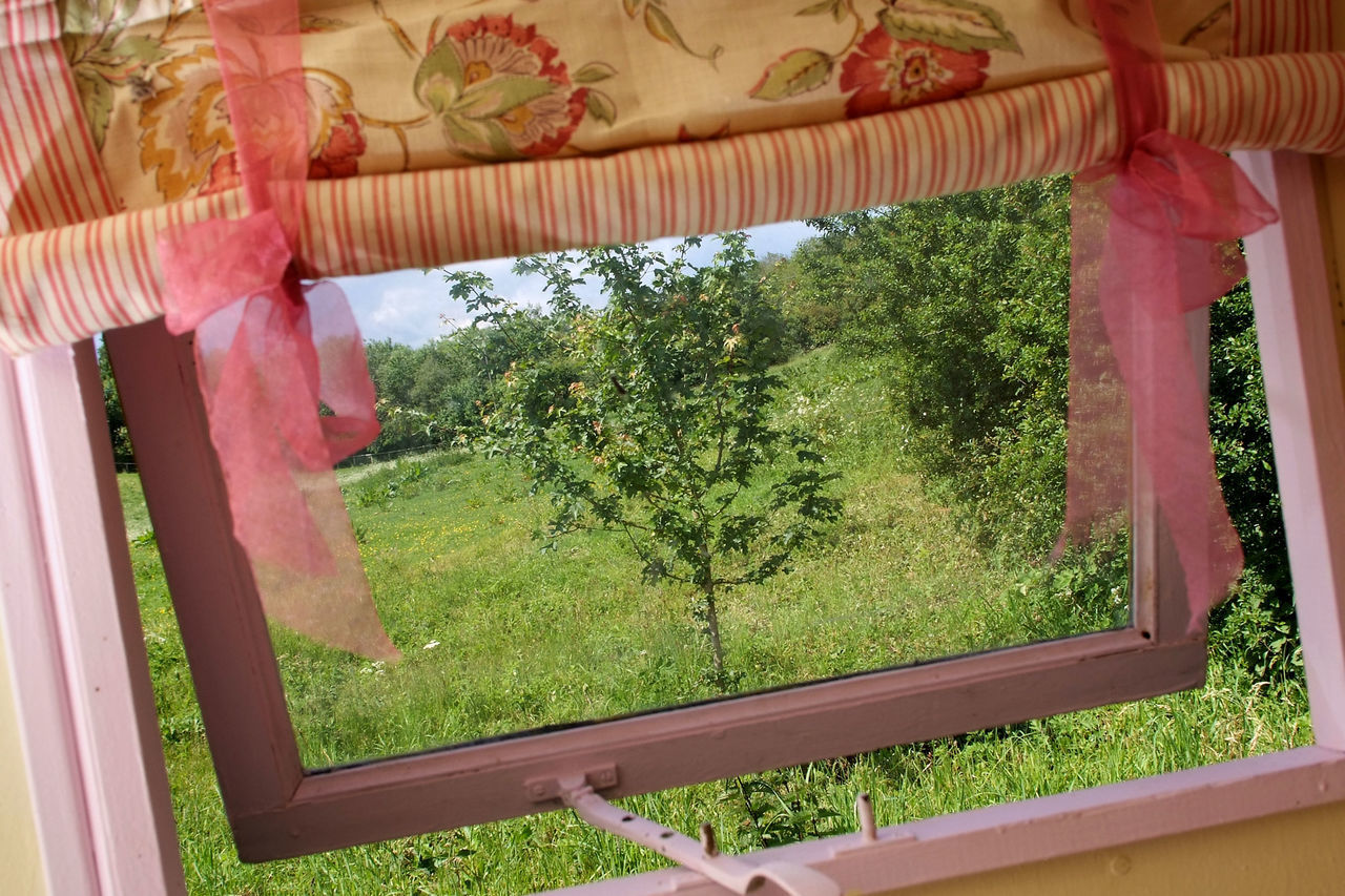 tree, window, growth, green color, nature, no people, day, plant, curtain, indoors, beauty in nature, close-up, sky
