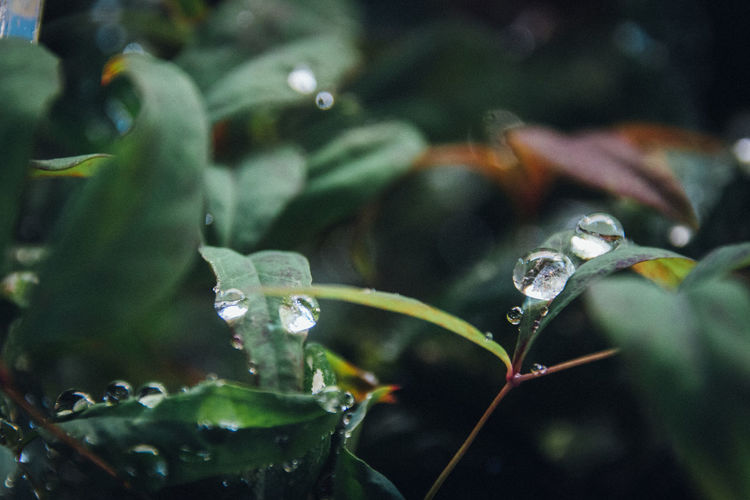 Beautiful Nature Silence EyeEm Nature Lover Green Relaxing Beauty In Nature Close-up Day Drop Fragility Freshness Growth Leaf Leaves Morning Dew Nature Naturelovers No People Outdoors Plant Water Waterdrops EyeEm Best Shots Simple Moment Nature's Diversities The Week On EyeEm