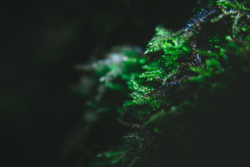 Close-up of moss