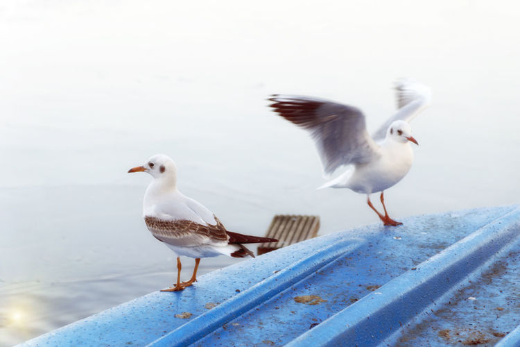 Gulls are landing on a blue boat Animal Themes Animal Wildlife Animals In The Wild Bird Day Gulls Gulls In Flight Nature No People Outdoors Perching Sky Spread Wings
