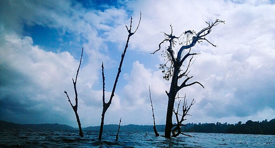 Dead trees in the Brokopondo Reservoir Beauty In Nature Trees And Nature Trees Silhouettes Brokopondo Resevoir Brokopondo District Suriname South America