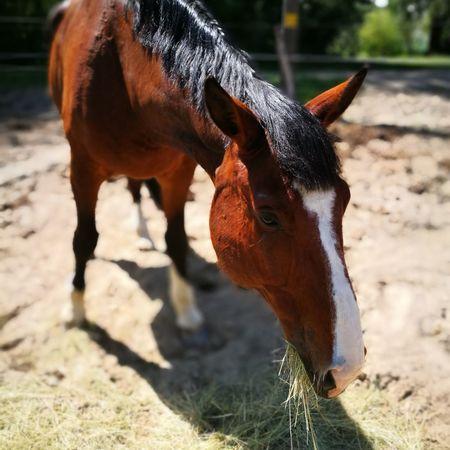 Horseback Riding Horse Brown Close-up Livestock Animal Body Part