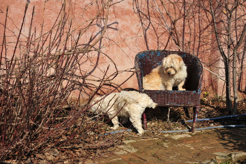 Cool Dog Dog On Chair Dogs FUNNY ANIMALS Funnydogs Peeing Dog
