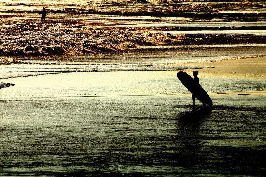 Silhouette Surfer Animals In The Wild Bali Surfer Beach Beauty In Nature Bird Day Leisure Activity Lifestyles Mammal Men Nature Ocean And Man One Animal One Person Outdoors People Real People Scenics Sea Silhouette Solo Surfer Sunset Sunset Mood Surfing Water Wave
