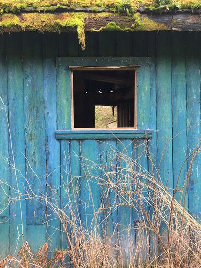 Old Cabin Brilliant Colors Trifecta