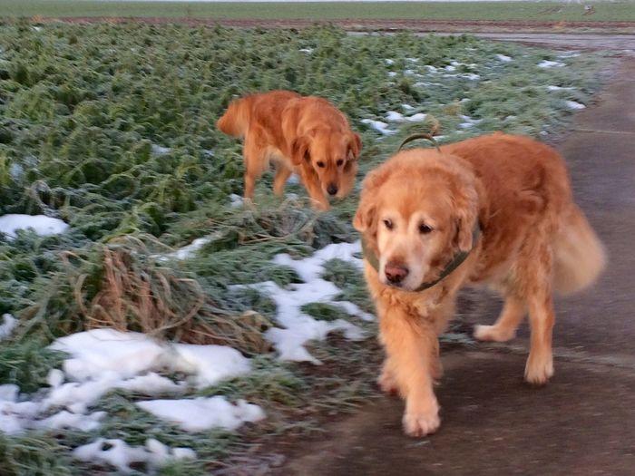 Dogs Dog I Love