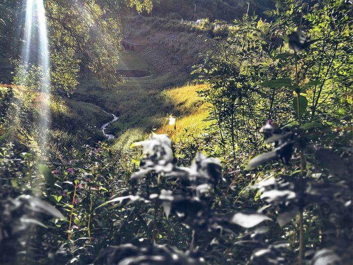 Undergrowth Himalayan Balsam Wayoh Reservoir EyeEm Nature Lover Evening Walk EyeEm Best Shots - Nature Water Close-up