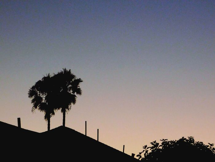 Alone together Alonetogether Palm Trees Tree_collection  Sunset #sun #clouds #skylovers #sky #nature #beautifulinnature #naturalbeauty #photography #landscape Likeforlike #likemyphoto #qlikemyphotos #like4like #likemypic #likeback #ilikeback #10likes #50likes #100likes #20likes #likere EyeEm Best Shots Digitalphotography Photooftheday Inspired Eyeemfame Eyeemcollection Followmeplease Photography Alviso Hood Kissingpink Pinksunset Evening Sky