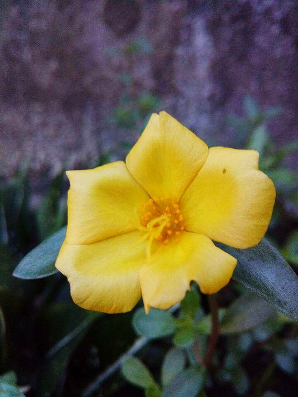 flower, fragility, petal, yellow, flower head, beauty in nature, nature, freshness, close-up, no people, growth, outdoors, blooming, day, focus on foreground, plant, springtime
