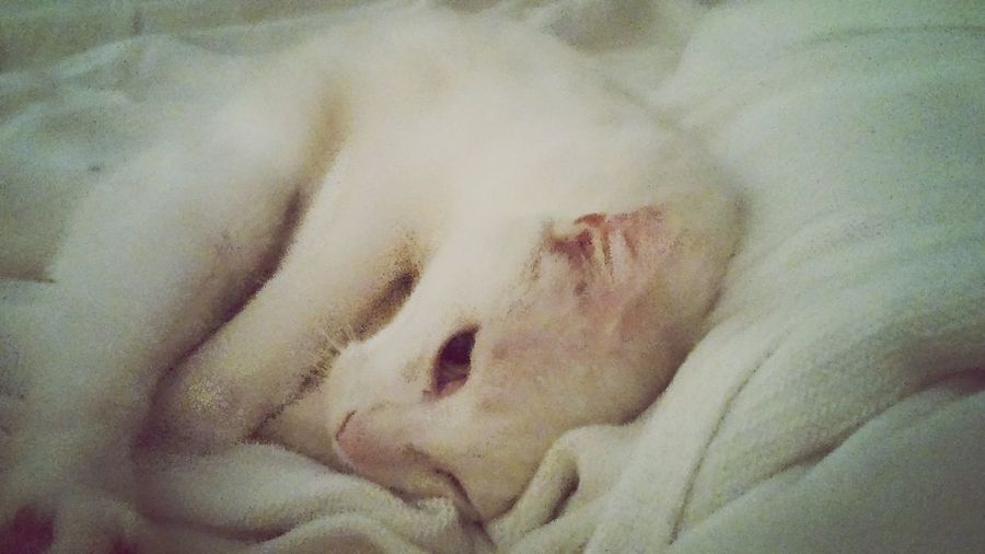 Kitty!  Cuddle Cute Pets Cutieeee My kitty is warm when laying next to me ~
