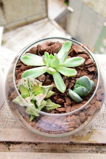 Fish Bowl Flower Flower Arrangement Flowers Garden Greenery Home Decor Plants Succulent Plants Succulents