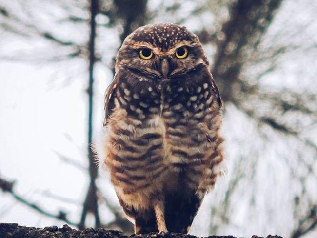 Whooooo ☀ Owl Nature Vscocam Voltei