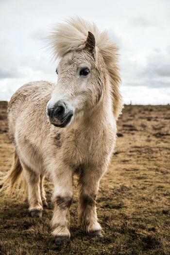 Animal Themes Close-up Crazy Hair Enjoying Life Eye4photography  EyeEm Best Shots EyeEm Nature Lover Herbivorous Livestock One Animal Pony Relaxation Shetland Pony Wildlife