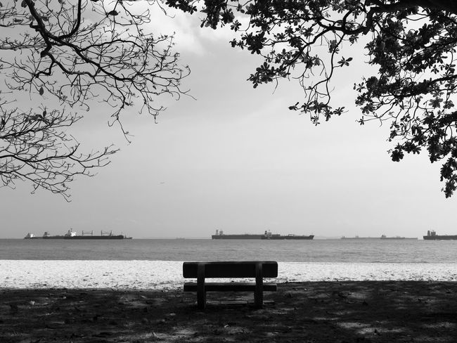 Empty bench facing sea under trees, in black and white Seat Bench Water Tree Sky Tranquility Plant Tranquil Scene Empty Park Bench No People Outdoors Park Beach Trees Shade Shadows Ships Sea Black And White Silhouette Moody