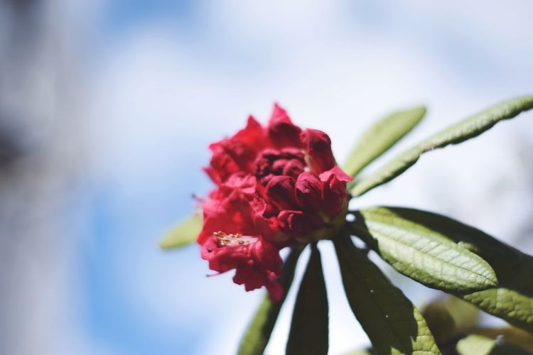 Multi Colored Pink Color Petal Close-up Plant
