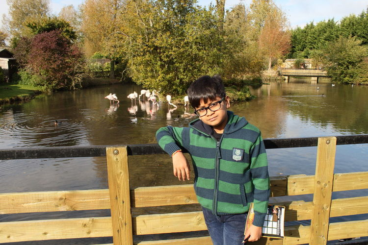 Portrait Of Boy Leaning On Railing While Standing Against Flamingos In Pond