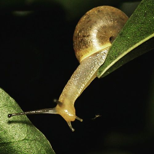 Moving. Snail Keong Cute Macrophotography