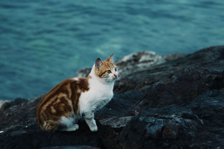 Cat looking away on rock
