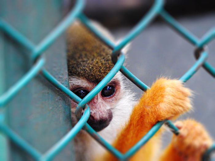 Monkey behind fence at zoo