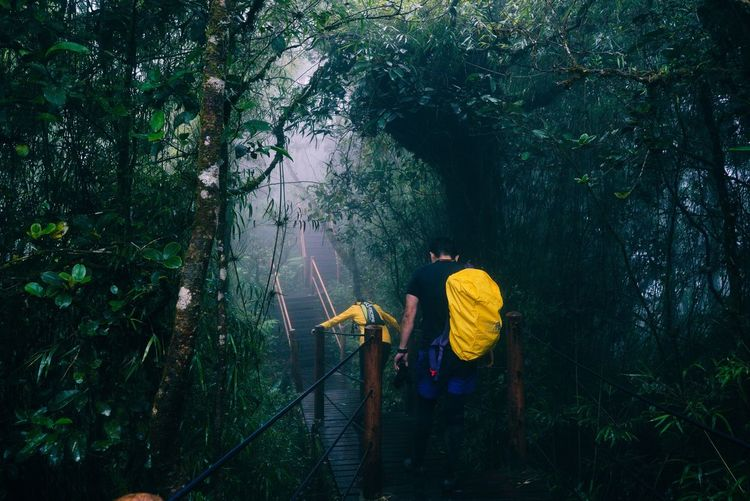 Mossy Forest Cameron Highland Malaysia Tree Full Length Real People Nature Forest Outdoors Standing Growth Day Adventure People Climbing One Person Adult