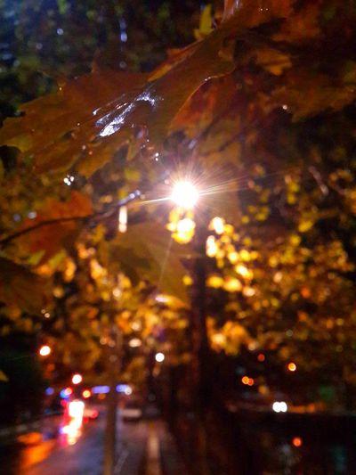 Nofilter NofilternoeditAfter The Rain Raindrops Nightshoot Tree Leafs Shakingmyhands Samsung Galaxy S4