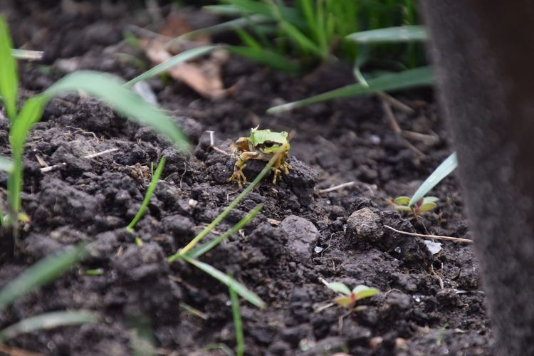 frog Frog Tamron NIKON D5300 EyeEmNewHere Growth Plant Selective Focus Dirt Beginnings Nature Field