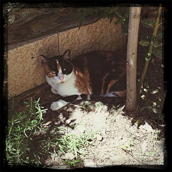 Como una Reina!!! A la sombra del laurel. ?? My Cat