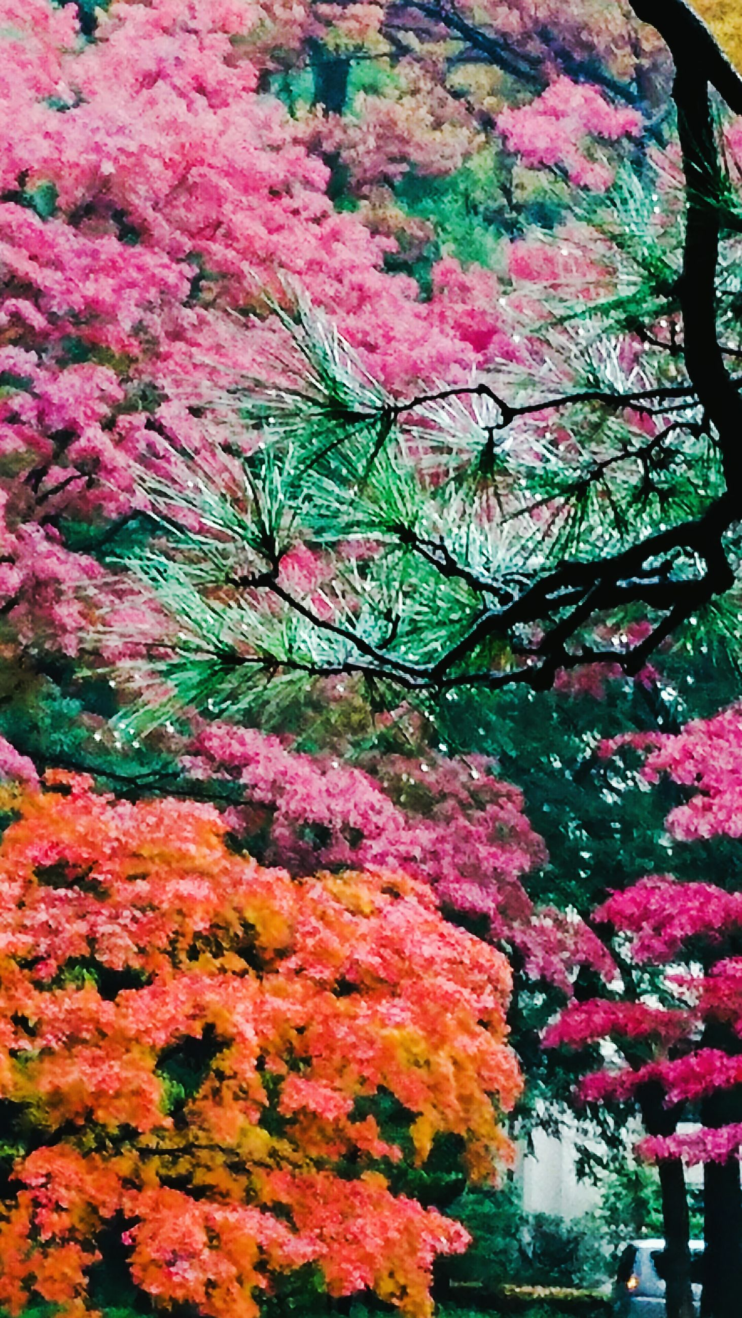 growth, nature, pink color, flower, plant, tree, outdoors, no people, freshness, fragility, close-up, day, beauty in nature
