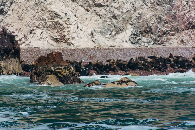 Rare view of sea lions on shore