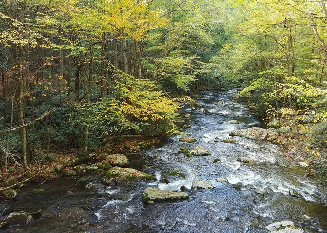Near the beginning of the Middle Prong Trail in the Great Smoky Mountains. October 2015. Tremont Great Smoky Mountains National Park Tennessee Trails Hiking Adventures Water Fall Smokies Stream Creek Middle Prong Trail Little River Water On Rocks Deep Woods Trees Forest Landscape WoodLand