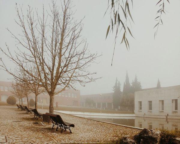 Vanishing Point Vscogood VSCO Cam Vscocam VSCO EyeEm Portugal Tomar Winter Vscogrid