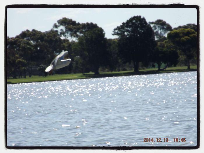 Bird Park The Purist (no Edit, No Filter)
