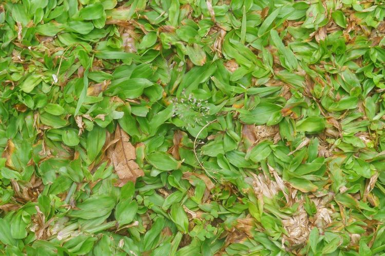 Full frame shot of ivy growing on land