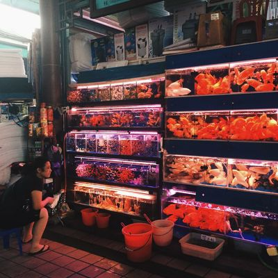 Fish Need A Friend Pets Relaxing 手机摄影 Okphotography Guangzhou IPhoneography