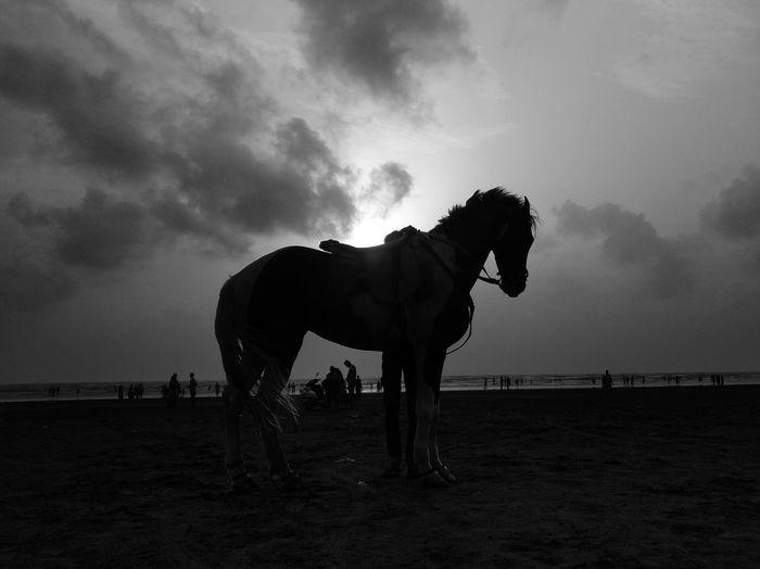 Silhouette of a Horse. Horse Animal Silhouette Beach Sunset Evening Maharashtra Vangaon India Travel Photography Horse Racing Desert Sand Horse Jockey Side View Sky Cloud - Sky Working Animal Horseback Riding Saddle Sun Shore