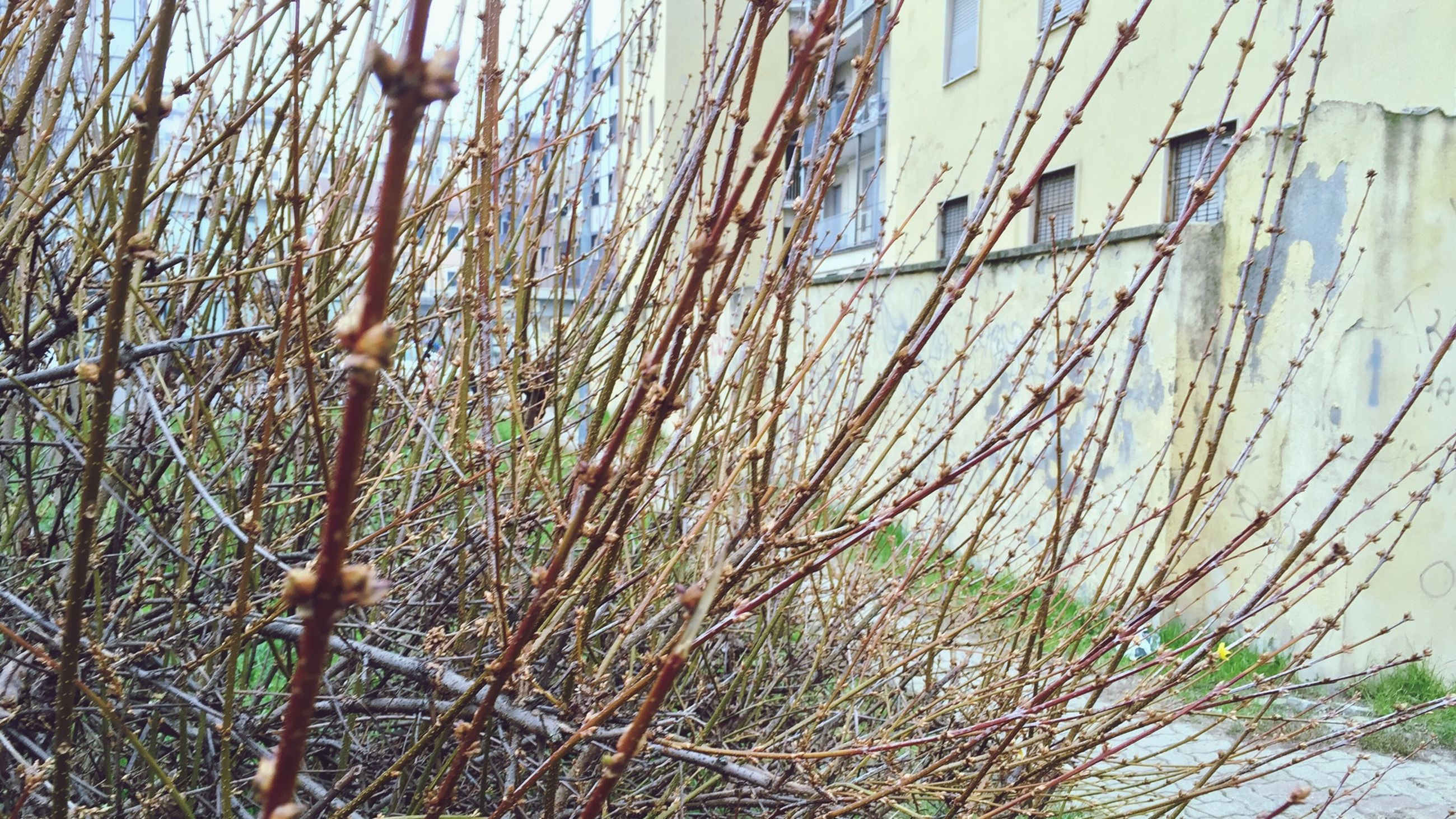 growth, plant, nature, close-up, branch, growing, day, built structure, building exterior, twig, outdoors, tree, leaf, stem, architecture, no people, beauty in nature, water, focus on foreground, tranquility