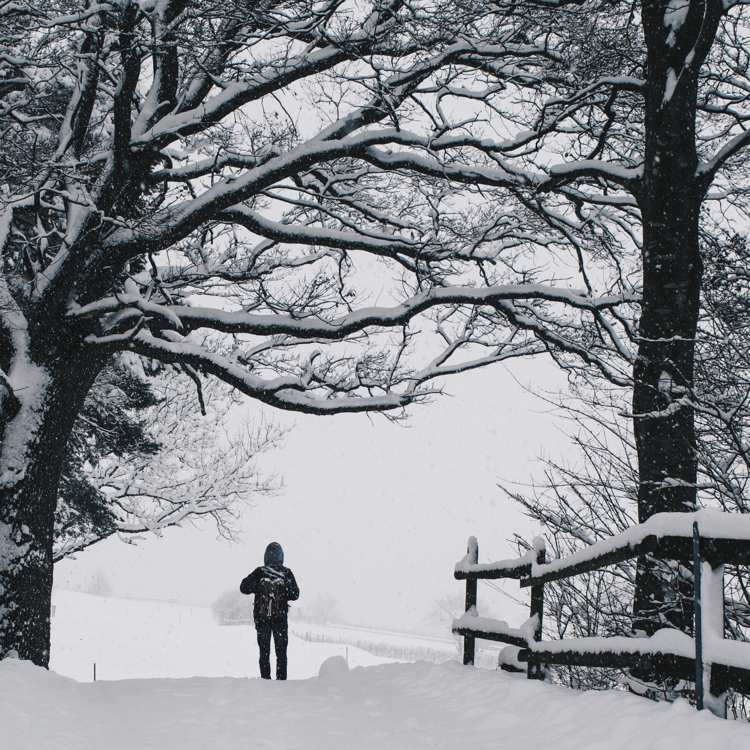 winter, snow, cold temperature, bare tree, season, tree, weather, full length, branch, rear view, lifestyles, leisure activity, walking, nature, tranquility, covering, tranquil scene, men