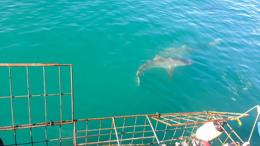 Sourh africa shark diving cage experience view for boat rooftop