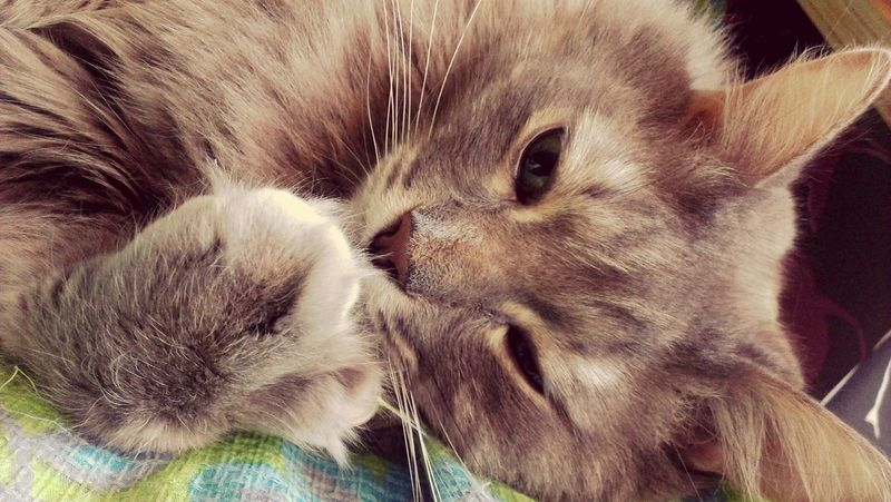 Мухтар Cat♡ Cat Cats