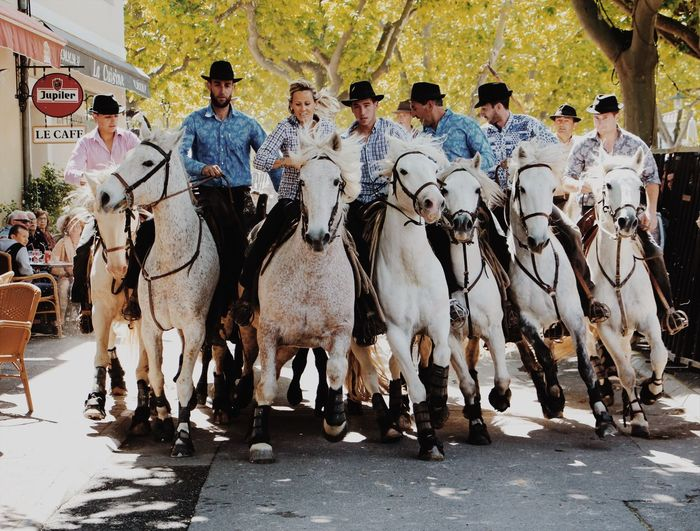 Camargue horses Cowb Cowboy Bull Work Action White Horse Fontvieille Riding Festival Camargue Camargue Horses Horses EyeEmNewHere Horse Crowd People #FREIHEITBERLIN The Photojournalist - 2018 EyeEm Awards The Street Photographer - 2018 EyeEm Awards